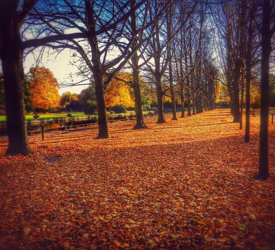 Autumn Park by Nat Bolfan-Stosic - City,  Street & Park  City Parks ( park, autumn, bright colored, trees, city )
