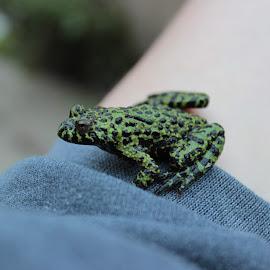 by Christina Shields - Animals Amphibians
