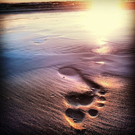 Footprints by Jenny-Lee Livingston - Nature Up Close Sand ( sand, sunset, footprint, beach, natural )