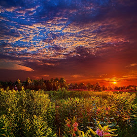 Heaven on Earth by Phil Koch - Landscapes Prairies, Meadows & Fields ( vertical, photograph, farmland, yellow, leaves, love, sky, nature, tree, autumn, snow, orange, twilight, agriculture, horizon, portrait, dawn, environment, season, national geographic, serene, trees, floral, inspirational, wisconsin, natural light, phil koch, spring, photography, sun, farm, horizons, inspired, clouds, office, park, green, scenic, morning, shadows, field, red, blue, sunset, fall, peace, meadow, summer, sunrise, earth, landscapes,  )