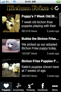 Bichon Frise + - screenshot