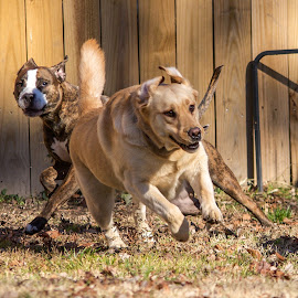 Playtime by Michael Mascorro - Animals - Dogs Running ( love, amazing, epic, natgeo, play, dog, photography, micanthony )
