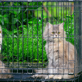 by Ryan Mainstreem - Animals - Cats Kittens (  )