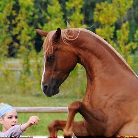 Kana & Rahela by Antica Karanovic - Animals Horses