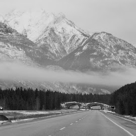 Canadian mountains by Lyne Chartier - Landscapes Mountains & Hills ( black and white, b&w, landscape )