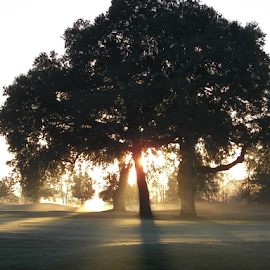 SUNRISE by Raymond Earl Eckert - Landscapes Forests ( mist; sunrise; tree; shadow; daylight )