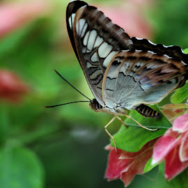 Butterfly by Nikki Wilson - Animals Insects & Spiders ( butterfly, nature, wings, beautiful, insect,  )