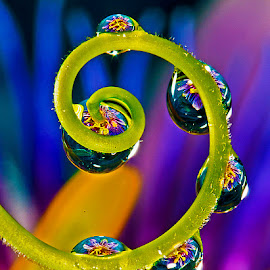 Drops withh passion flower by David Winchester - Nature Up Close Natural Waterdrops