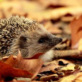 by Cyprien Conier - Animals Other Mammals