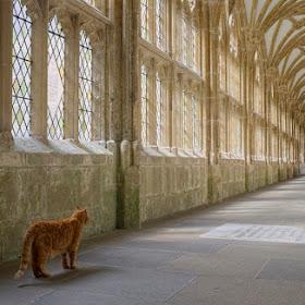 Cloister Cat.jpg