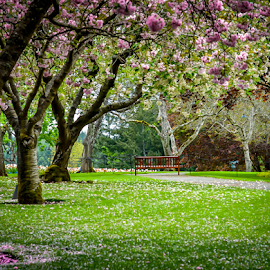 Spring by Darren Sutherland - Nature Up Close Trees & Bushes ( butcharts )