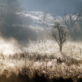 The Broons by Tommy  Cochrane - Landscapes Prairies, Meadows & Fields ( scotland, uk, cold, frost, morning, mist )
