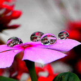 by Subho Saha - Abstract Water Drops & Splashes