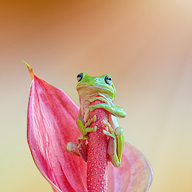 Waiting ^^ by Andri Priyadi - Animals Amphibians
