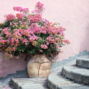 Morning beauty by Gabriel Catalin - Flowers Flower Arangements