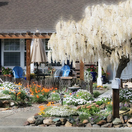 more spring in the hood by Leslie Hunziker - City,  Street & Park  Neighborhoods ( yard, plants, neighborhood, trees, house, spring )
