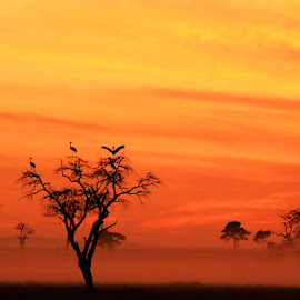 Crowned Cranes at Dawn by Dave Roberts - Landscapes Sunsets & Sunrises ( sunrise on masai mara, cranes )