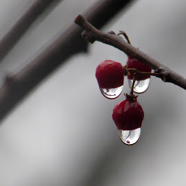 Droplet Reflections by Anne Santostefano - Nature Up Close Trees & Bushes ( nature, drops, rain )
