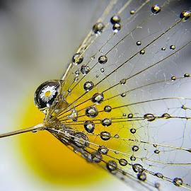 by Debbie Boettcher - Nature Up Close Other plants (  )