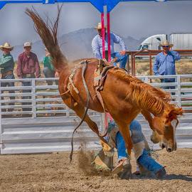 That's going to leave a mark! by Jim Shafer - Sports & Fitness Rodeo/Bull Riding ( cowboy, nevada, rodeo, bronc, western images )