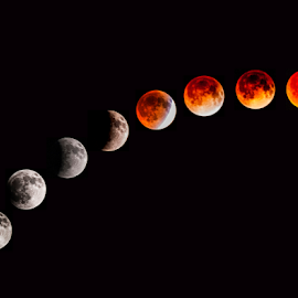 Lunar Eclipse April 2014 by Joe Saladino - News & Events Science ( blood moon, moon, lunar, astronomy, eclipse )
