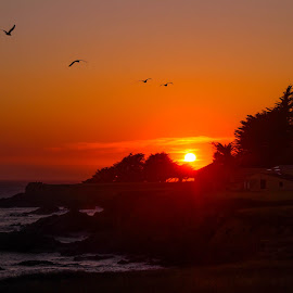 Hope by Trevor Fairbank - Landscapes Sunsets & Sunrises ( colorful, sunset, ocean, birds, hope, Hope )