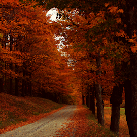 Vermont Country Road by Janet Lyle - Landscapes Forests ( autumn, foliage, fall, vermont )