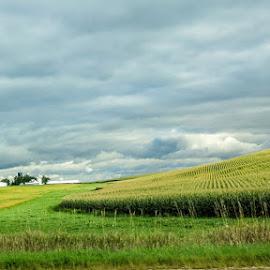 Iowa Afternoon by Shari Brase-Smith - Landscapes Prairies, Meadows & Fields ( field, farm, iowa, stormy sky, cornfield, landscape )