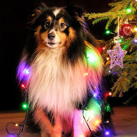 by Jane Bjerkli - Public Holidays Christmas (  )