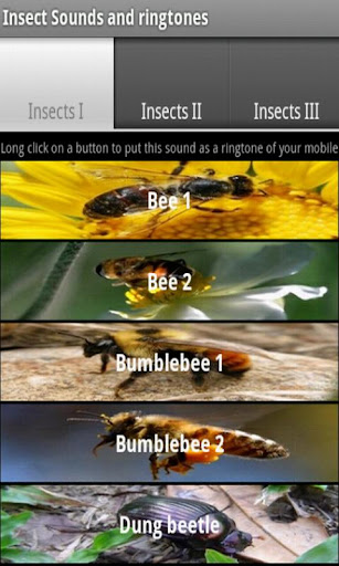 Insect sounds and ringtones