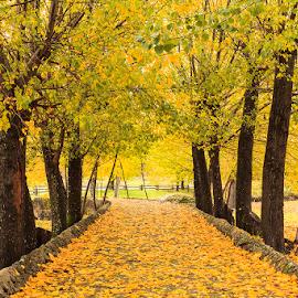 Fall by Pedro Barradas - Landscapes Forests ( pedrobarradas.com, canon 5dmk2, fall, comenda, portugal, color, colorful, nature )
