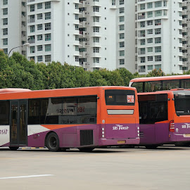 Public Buses by Koh Chip Whye - Transportation Automobiles (  )