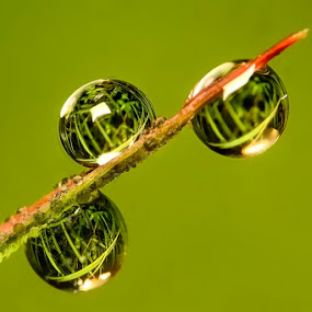 by Muhasrul Zubir - Nature Up Close Natural Waterdrops