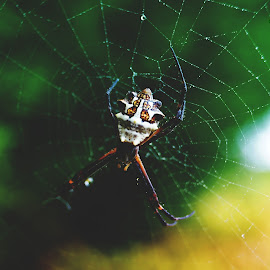 by Aja Crayton - Nature Up Close Webs ( macro, macro photography, drops, spider, dew drops, spider web, droplets )