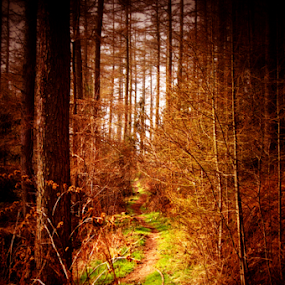 into the wood by Hayley Warriner - Nature Up Close Trees & Bushes ( trees, forest, leaves, walk )