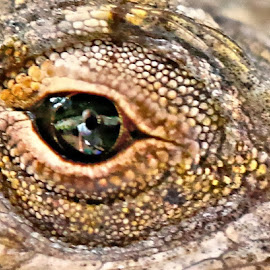 Lizard eye mirror by Sandy Scott - Animals Reptiles ( brown anole lizard, macro, lizard, eye photo, lizard eye, lizard macro,  )