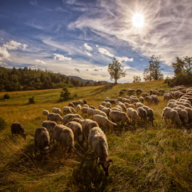 A flock of sheep in Summer time by Stanislav Horacek - Landscapes Prairies, Meadows & Fields