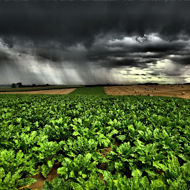 Stormy August Day by Tonino De Rubeis - Landscapes Weather