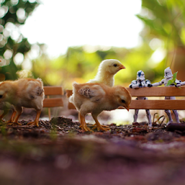 Little Farm by Zahir Batin - Artistic Objects Toys ( chicken, fence, figure, doll, toys, malaysia, baby, young, animal, starwars )