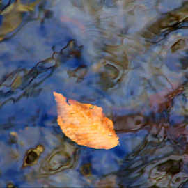 Floating Leaf by Darlene Lankford Honeycutt - Abstract Patterns ( water, abstract, patterns, deez, dl honeycutt, leaf )