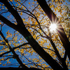 The soothing fall by Aldrin Malakar - Landscapes Weather ( fall2014, tree, silhouette, fall, sun rays )
