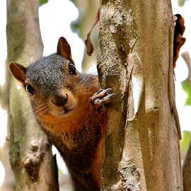 Who me? by Zeralda La Grange - Animals Other ( #portrait, #nature, #animal, #tree, #squirrel,  )