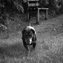 Black and white by Audra Kolcina - Animals - Dogs Puppies