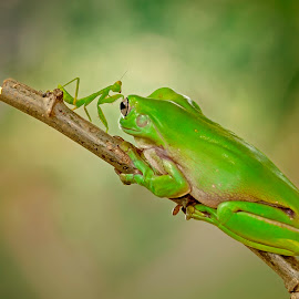 Are u Ok..? i'm not.... by Aditya Permana - Animals Amphibians