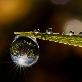 Sun Reflection by Kutub Macro-man - Nature Up Close Natural Waterdrops ( reflection, nature, drop, dew drop, water drop )