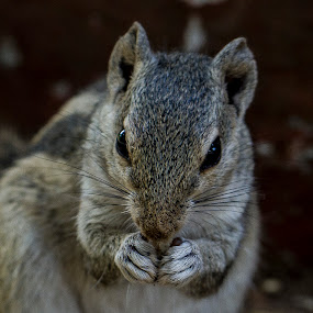 Hungry by Monish Kumar - Animals Other Mammals