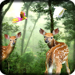 Rain Forest Live Wallpaper 1.08 Apk
