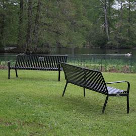 Serenity by Cathy Harper - City,  Street & Park  City Parks ( public park, ponds, benches, park, bench, parks, public, pond, furniture, object )