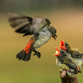 Mom.....Please come back  by MazLoy Husada - Animals Birds
