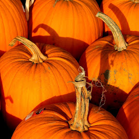 The pumpkins are starting to get scarce here. by Liz Hahn - Nature Up Close Gardens & Produce